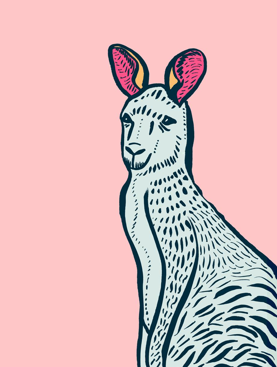 NatCarroll_SummerSoundsFestival_Illustration_Kangaroo_5cols