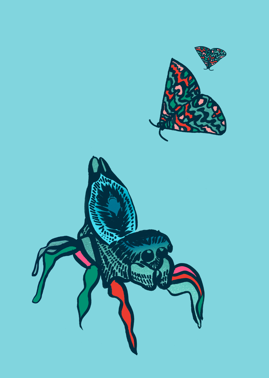 NatCarroll_SummerSoundsFestival_Illustration_PeacockSpider_Moths_5cols